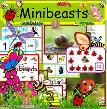 MINI BEASTS teaching resources life cycle  EYFS KS1 childminder on CD OFSTED