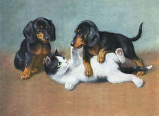 DACHSHUND CHARMING DOG GREETINGS NOTE CARD TWO CUTE PUPPIES PLAY WITH KITTEN