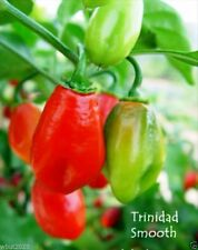 25 TRINIDAD SMOOTH Pepper seeds~Heirloom,- Sweet/Mild; Habanero Seasoning Pepper
