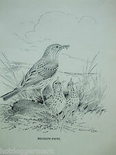 ANTIQUE PRINT DATED 1923 BIRDS & THEIR YOUNG MEADOW-PIPIT BY ROLAND GREEN