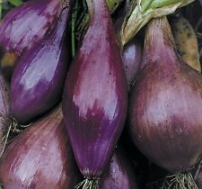 ONION SEEDS~LONG RED FLORENCE~HEIRLOOM~100 SEEDS