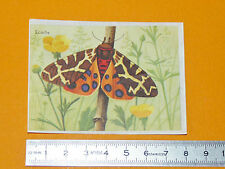 CHROMO BISCOTTES LUC 1952 PAPILLONS BUTTERFLY ECAILLE