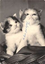 B98564 chat cat real photo animals animaux