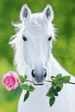 WHITE HORSE WITH ROSE - ART POSTER - 24x36 NATURE ANIMAL FLOWER 1528
