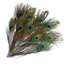 10 x Beautiful Real Natural Peacock Tail Eyes Feathers DIY Decoration 10-12 inch