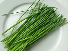1000 Chives Seeds,(Allium Schoenoprasum) Must Grow- Herb - Perennial