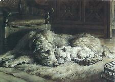 Irish Wolfhound Print, Wolfhound with Westie