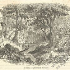 Forest Home of American Monkeys: antique 1866 engraving print - primate, picture