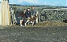 Family negative collection High Scales farm Thackery les prize cattle sheep HPP3
