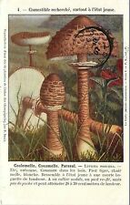 c1907 Printed Postcard; Edible Lepiota procera Parasol Mushroom, France, Posted