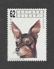 Dog Art Head Portrait Postage Stamp TOY MANCHESTER TERRIER Bulgaria 1991 MNH