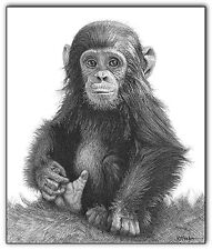 chimp print monkey picture baby animal sketch A3 wildlife wall art drawing image