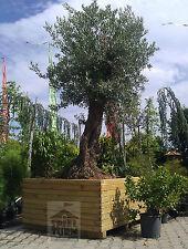 HOQ Pflanzkasten 120x120x79 cm Pflanztrog Pflanztopf Pflanzkübel aus Holz NEU
