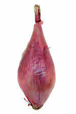 630mg Long Red Florence Onion Seeds ~ Uncommon Italian Heirloom ~ Mild and Sweet
