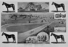 INDEPENDENCE IOWA CELEBRATED RUSH PARK HIGH BRED TROTTER HORSE TENNANTS TRACK