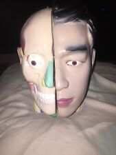 """Vintage LIfe Size Head and Brain Anatomical Model 10.5"""" Medical Anatomy"""