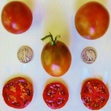 Black Prince - Organic Heirloom Tomato Seeds - Delicious Slicer - 40 Seeds