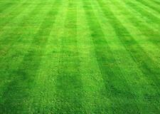 LAWN GRASS SEEDS,-1500 Seeds  (Dust free), Dark Green Soft Turf Grass