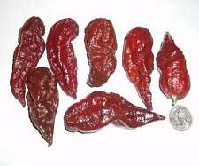 New Crop 2016, 14 Seeds From Organically Grown Chocolate Bhutlah Pepper Plants