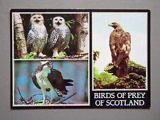 R&L Postcard: Birds of Prey Scotland, Snowy Owl, Osprey, Golden Eagle, JA Dixon