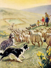 BEARDED AND BORDER COLLIE DOGS HERDING SHEEP LOVELY DOG GREETINGS NOTE CARD