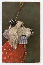 illustrateur signé . Chien de cirque. Le CANICHE . Circus dog . POODLE