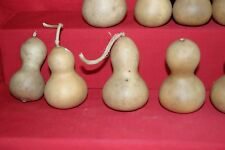 GOURDS 100 MEDIUM  MINI CHINESE BOTTLE  GOURDS ( DRIED AND CLEANED)