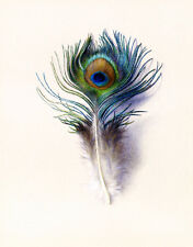 Peacock Feather  by Charles H Moore   Paper Print Repro
