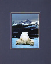Art Wolfe Dream of a Polar Bear Poster Kunstdruck Bild 50x40cm - Portofrei