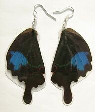 Pair of earrings from real butterfly wings of Papilio paris