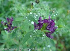 alfalfa Luzerne 200 Samen wertvolle Futterpflanze Nahrungspflanze Sprossen