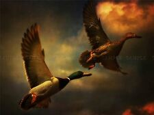 HDR FLYING DUCKS MALLARD SKY PHOTO ART PRINT POSTER PICTURE BMP513A
