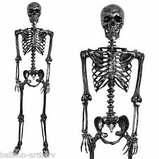 5ft Life Size Halloween Black Silver Metallic Human Poseable Skeleton Decoration
