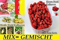 100x Riesen Wald Erdbeeren Gemischt Mix Pflanze Rarität essbar Samen Obst #124