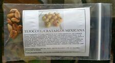 plum seeds TEJOCOTE South American RARE*