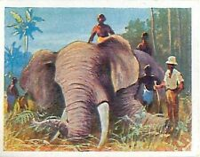 chasse à l'Elephant hunting German colonial empire Africa Afrique IMAGE CARD 30s
