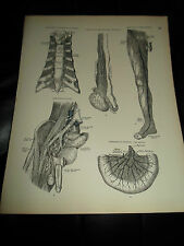 ARTERIES+VEINS+LYMPHATICS #75 Old Print From Descriptive Atlas of Anatomy 1880