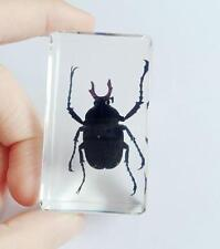 Chinese in Clear Acrylic Lucite Paperweight Insect Collection Bug Beetle Gift