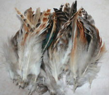 "50+ 6-8"" Natural Red Grizzly Chinchilla Schlappen Feathers,  fly tying"