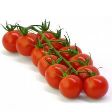 10x Huge Tomato Seed Delicious Fruits Vegetables Plant Organic Heirloom Seed