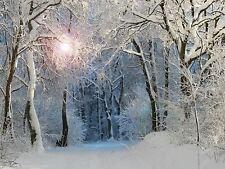 """FOTO PITTURA DIGITALE Inverno alberi da bosco 18x24"""" poster art print lf048"""