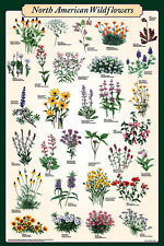 AMERICAN WILD FLOWERS POSTER (61x91cm) EDUCATIONAL CHART NEW LICENSED WALL ART