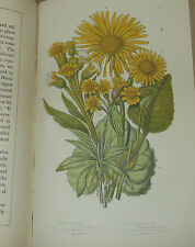 1873 Pratts Flowering Plants 53 col  Vol 3 Herbs  Antiquarian Natural History