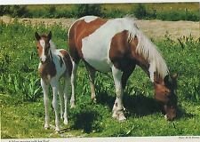 Mare and Foal.John Hinde.2 Gen 71.Horse Postcard