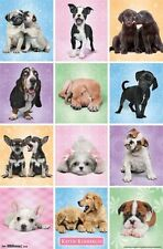 PUPPIES - KIMBERLIN POSTER - 22x34 CUTE CUTIES DOGS PUPPY 14199
