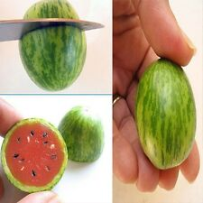 Hot Cucamelon Mini Watermelon Red Miniature Fruit Home Yard Garden Plant Seed H7