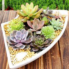 150pcs Mixed Succulent Seeds Lithops Rare Stones Plants Cactus Home&Garden Plant