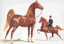 1962 AMERICAN SADDLEBRED  Horse Print Sam Savitt Best Offer