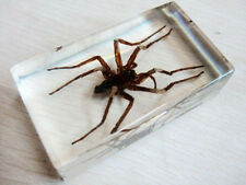 7 * 4 * 2 CM Chinese golden spider Clear Block Paperweight Oddities Desk