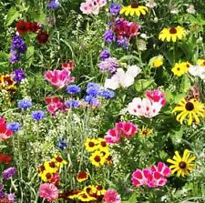 WildFlower Mix,Birds,Bees&Butterfly,1oz,Approx 8,750 Seeds,Covers125 square ft